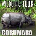 Wild Life Tour