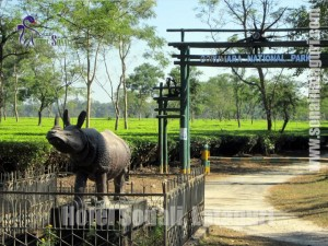 Gorumara Jungle Safari & Lataguri, Dooars Activities
