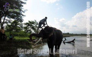 Gorumara Jungle Safari & Lataguri, Dooars Activities